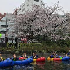 満開の桜を求めて!東京遠征~